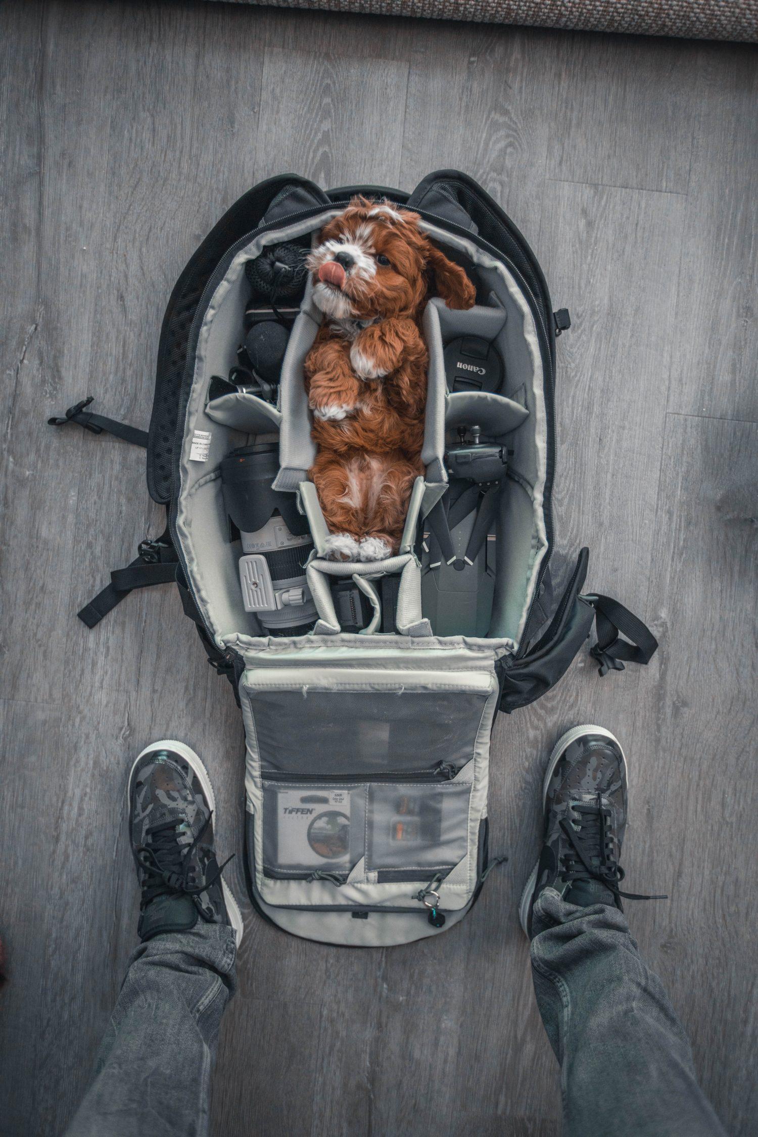 Travel Dog Sitter